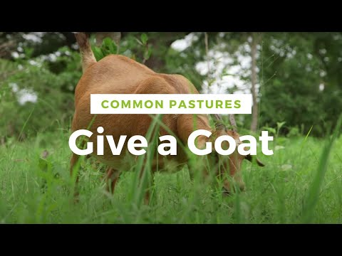 Give a Goat to a Farmer in Mali -- Common Pastures