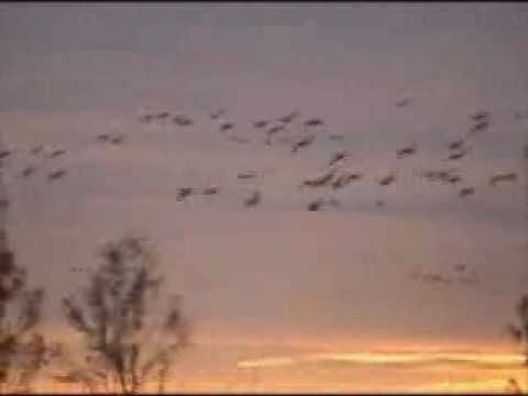 welcome-to-cco-waterfowl-hunting.wmv