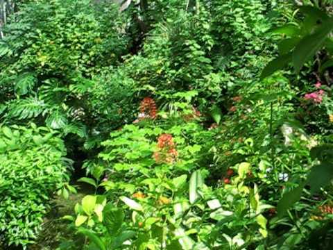 uf butterfly garden - Uf Butterfly Garden