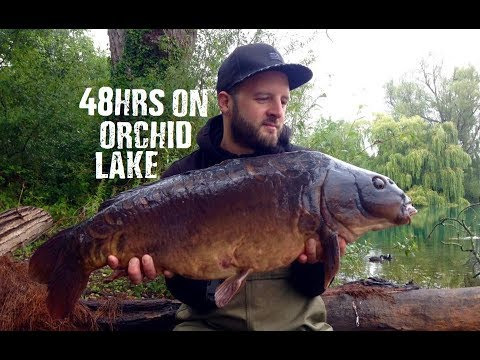 48hrs On Orchid Lake || Carp Fishing || August 2017