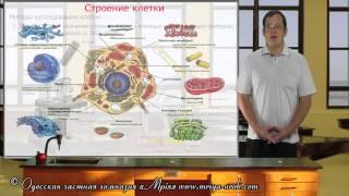 Cтроение клетки (урок 1)