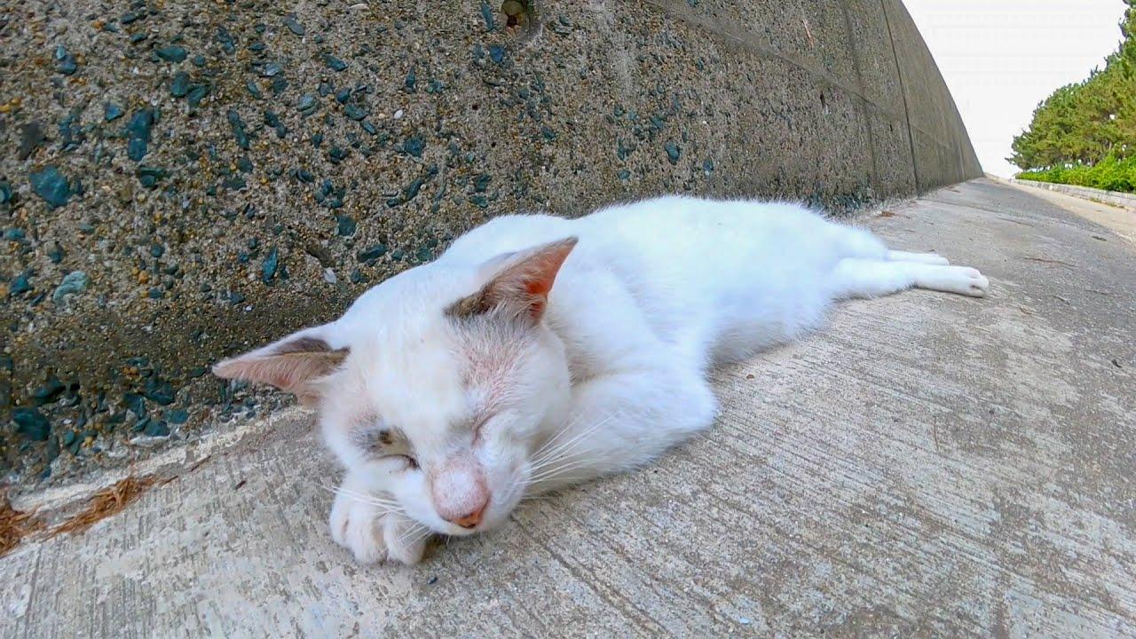 防波堤の日陰で休む野良猫をナデナデしてきた