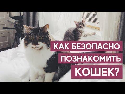 Вопрос: Как помочь котам подружиться?