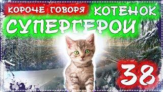КОРОЧЕ ГОВОРЯ КОТЕНОК СУПЕР ГЕРОЙ 38 [От первого лица] Бездомный котенок Лайки - история одной жизни