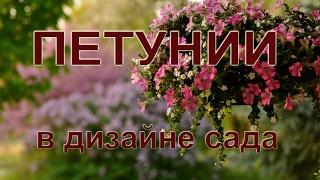 Петуния - украшение сада