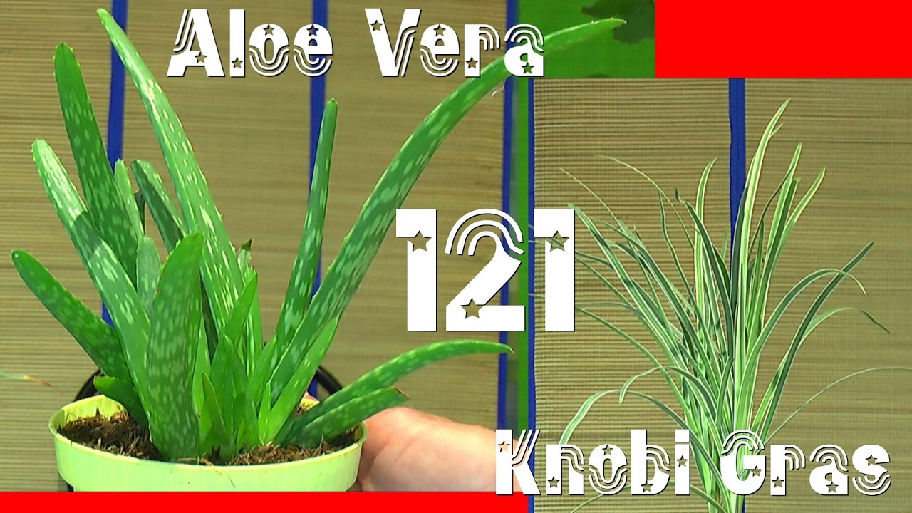 aloe vera knoblauch gras und zimt aroma pflanzen youtube. Black Bedroom Furniture Sets. Home Design Ideas