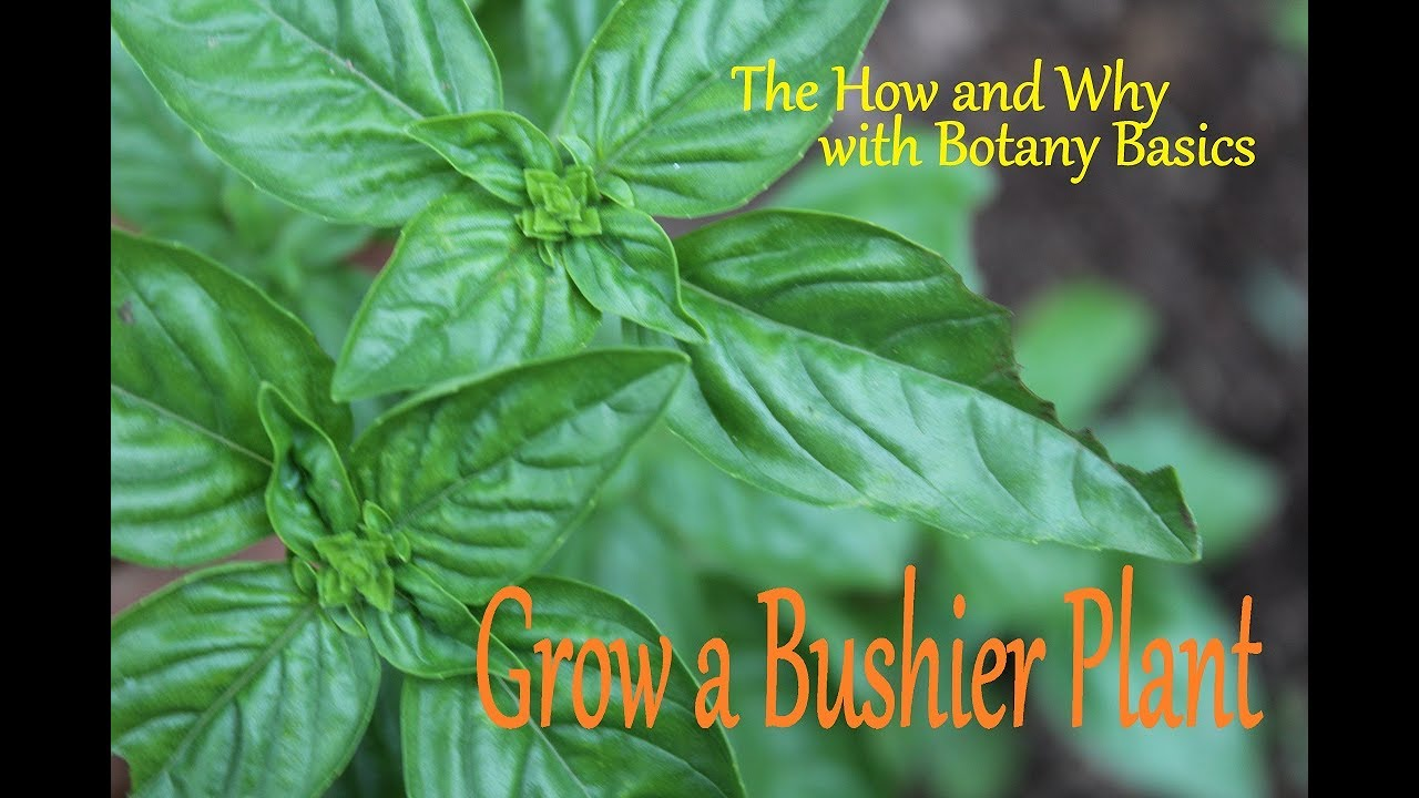 Topping Plants & The Science Behind It