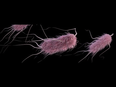 Escherichia coli.  Infección urinaria.