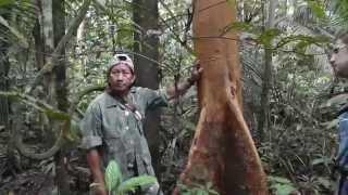 Путешествие в Южную Америку.  Часть 7.  Амазонка(В ноябре 2014 года мы с женой самостоятельно посетили Южную Америку. В данной части фильма рассказывается..., 2015-03-11T12:37:09.000Z)