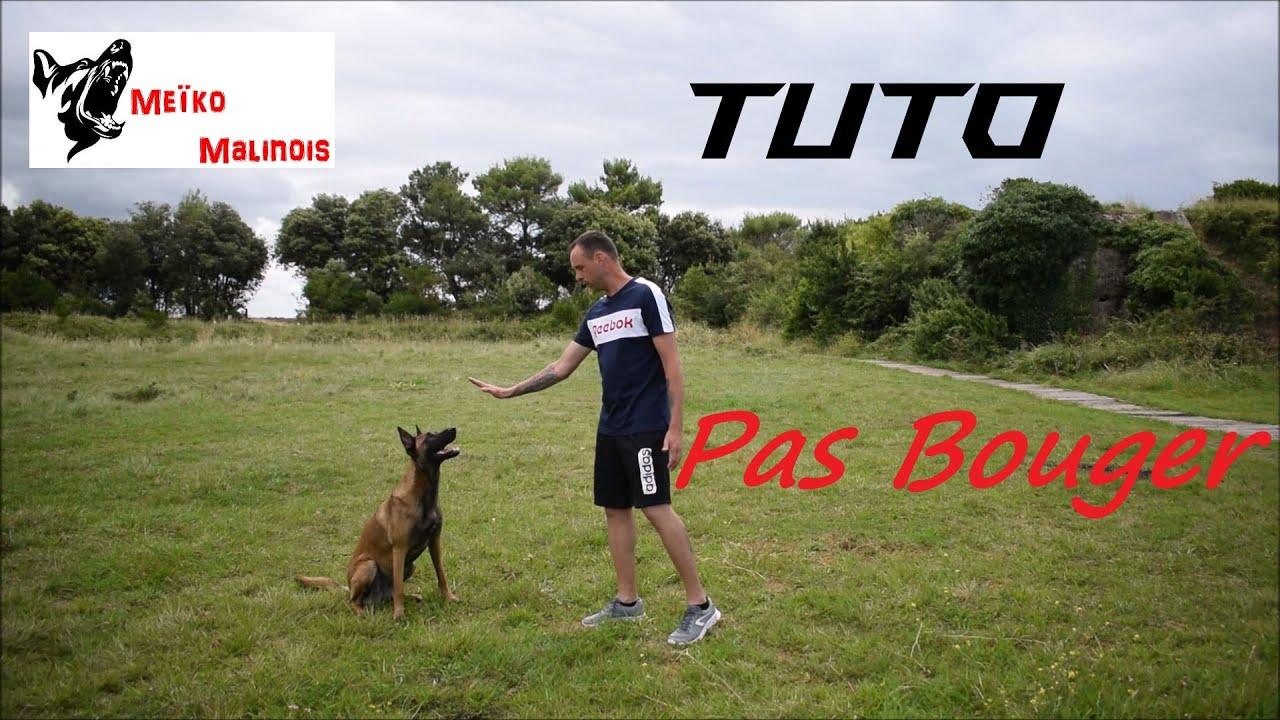 """Tuto : Apprendre le """"Pas Bouger"""" à son chien"""