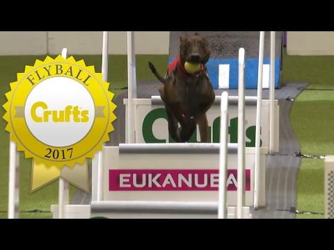 Flyball - Team Semi Finals (Part 2) | Crufts 2017