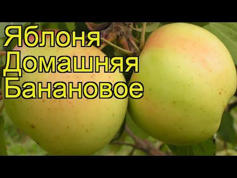 Яблоня домашняя Банановое. Краткий обзор, описание характеристик malus domestica Bananovoe