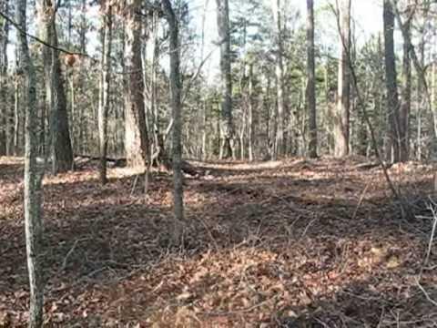 Crow Hunting in Chatham County, North Carolina