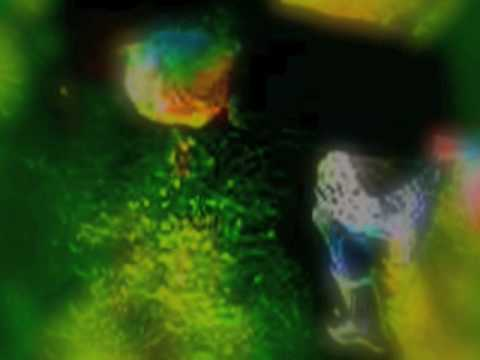 Diamond Day - Vashti Bunyan (MusicVid)