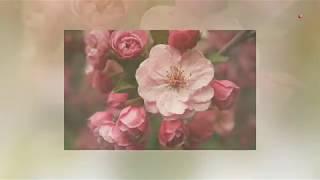 Катюша - Жасмин (2013) Subtitles