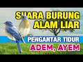 Suara Burung Air Relaksasi  Mp3 - Mp4 Download