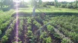 ВТОРОЕ ОКУЧИВАНИЕ КАРТОФЕЛЯ(Прошел дождик и настало время второго окучивания картофеля. За две недели сорняки еще не проросли, прополк..., 2015-06-18T19:49:38.000Z)