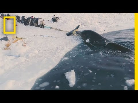 Experience a Traditional Whale Hunt in Northern Alaska | Short Film Showcase
