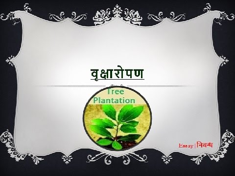 Hindi Essay on \u0027Tree Plantation\u0027 \u0027वृक्षारोपण\u0027 पर