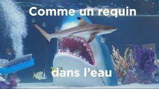 Comme un requin dans l'eau : Aquamen