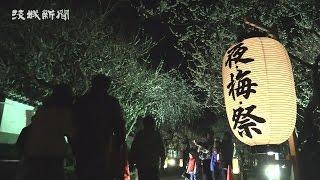 梅の花 闇夜に浮かぶ 「夜・梅・祭」開催 弘道館
