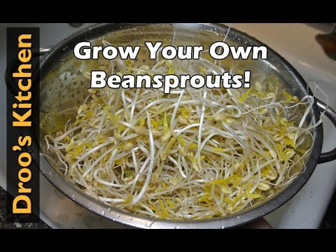 How to Grow Bean Sprouts from Mung Beans