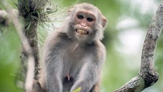 وثائقي عن القرد المغربي