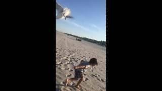 Video Seagulls Chase Little Boy at the Beach download MP3, 3GP, MP4, WEBM, AVI, FLV November 2017