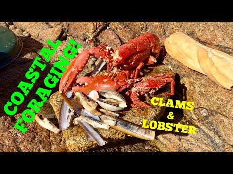 COASTAL FORAGING Clams, Lobster, Cooked Up On The Beach !