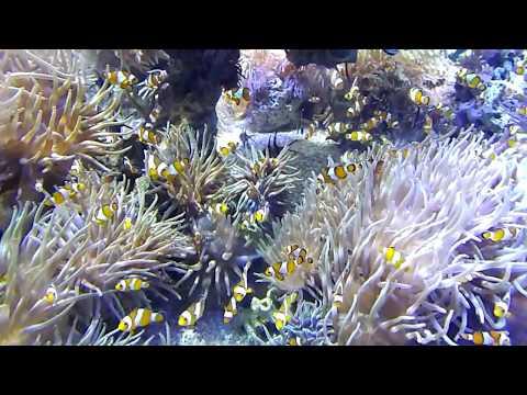 Monaco oceanographic museum and aquarium