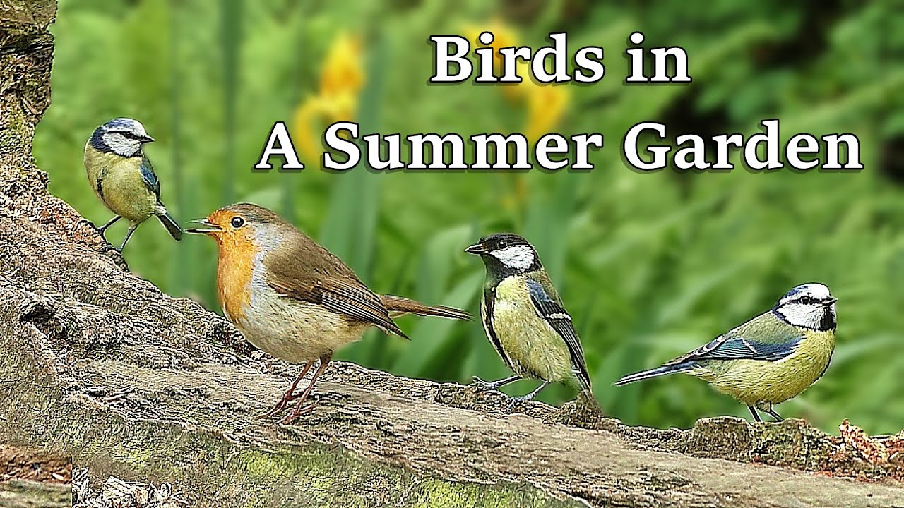 Birds in A Summer Garden