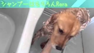 元理美容師・化粧品製造技術者が愛犬のために処方・開発したリンスイン...