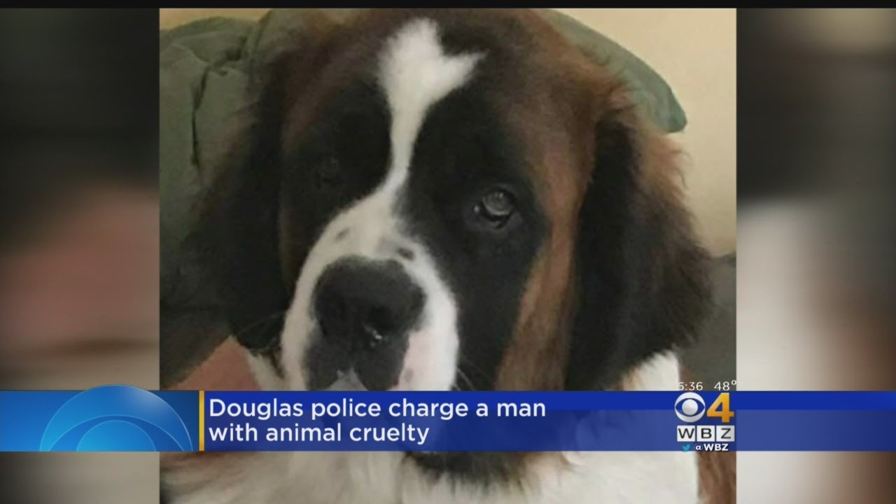 Police rescue 14 Saint Bernards From Cruel Conditions