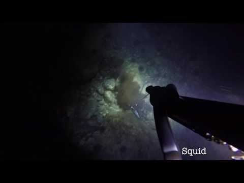 Wettie TV- Night Dive Sleeping Snapper & Shooting Squid