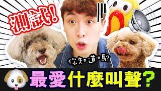 【測試】🐶你知道狗狗最愛什麼「叫聲🎵」嗎?🤣結果大跌眼鏡!?(中字)