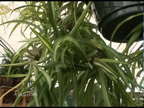 Indoor NASA Plants