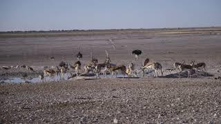 Животные Африки на водопое