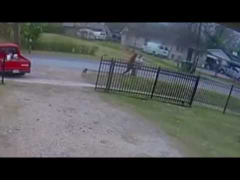 The Stansbury Show - Neighbor's Dog Attacks To Save Man From Mugging