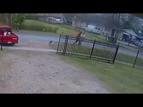 Captain Tony - Neighbor's Dog Attacks To Save Man From Mugging