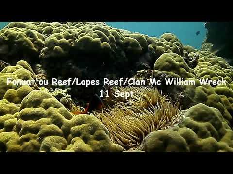 Tonga Dive Trip