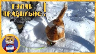 Рыжик гуляет по первому снегу