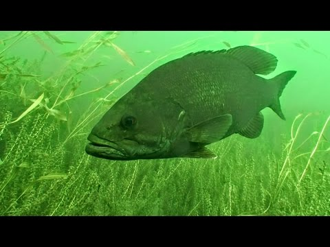 How Weather Influences Fish Behavior And Location