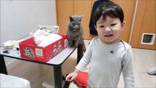 2歳児のプレッシャーに負ける灰猫&まったく動じない白モフ