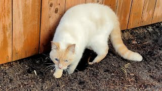 Our Cat Digs Dirt Like a Dog!