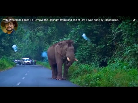 Every Procedure Failed To Remove the Elephant from road and at last it was done by Jasoprakas.