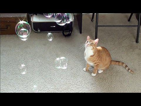 Catnip Bubbles!