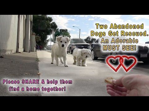 Thumbnail: A Dog Rescue Video That Will Make You Laugh, Smile & Believe In True Love!