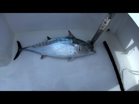 Offshore Fishing 2018 On The Hatteras Predator
