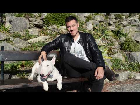 Rocky the Bull Terrier travels around Europe