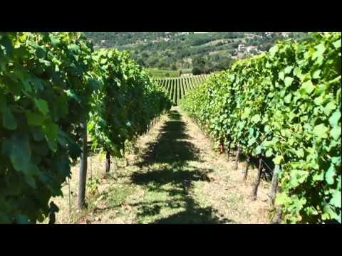JAMESSUCKLING.COM - Campania - Southern Italy